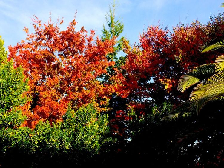 Fall Colors Plant Growth Tree Sky Beauty In Nature Nature No People