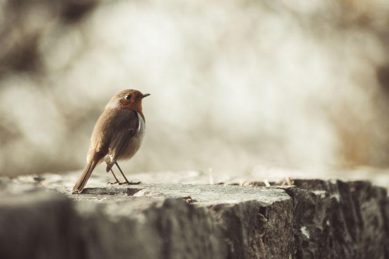 Bird ready to