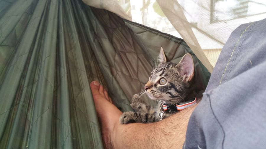Low section of man relaxing with cat in hammock
