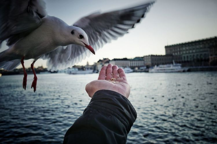 Low angle view of seagull flying over water