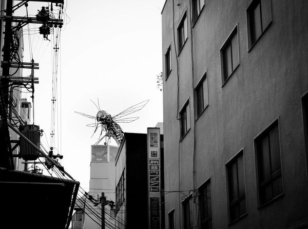 Be ready. I told you: They are coming!! Ant Ant Attack Art ASIA Blackandwhite Game Insect Japan Made In Japan Namba Nightlife OSAKA Sandy White Sculpture Shinsaibashi Suji Osaka Street Photography Streetart Travel Travel Photography Urban Videogames