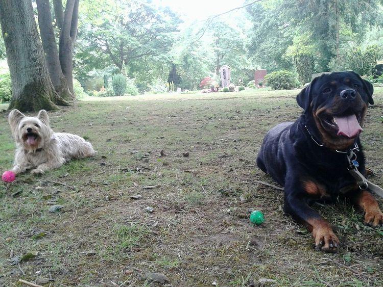 David und Freya Freizeit Hunderunde Pets Corner Mein Hund Kurzepausedanngehtsweiter Rottweiler