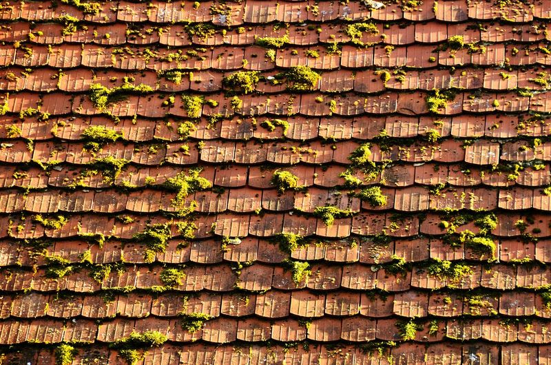 Full frame shot of moss on roof tiles