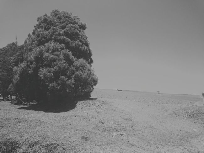 El arbol frondoso Tree Hanging Out Taking Photos Check This Out Hello World Relaxing Enjoying Life Colombia Colombia ♥  Tunja Life Trip Nature Exterior Blackandwhite The Great Outdoors - 2016 EyeEm Awards