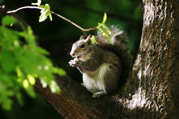 Animals Nature Nature Photography Squirrels Squirrel Closeup First Eyeem Photo