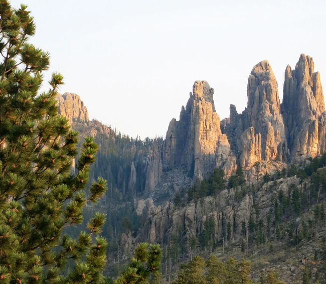 Scenic view of The Needles above forest landscape along the Needles Highway in Custer State Park in South Dakota Custer State Park View Beauty In Nature Clear Sky Day Forest Landscape Mountain Nature No People Outdoors Pinnacle Rocks Scenery Sky Travel Destinations Tree Wilderness