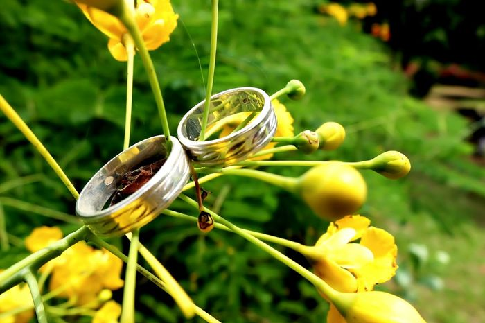 Ring Rings♥ Weddingring Weddingrings Ringandflower Couple Couplering Couples CoupleRingLove Love Engagement Engagement Ring Engagement Photography Forever Wedding Wedding Photography Rings