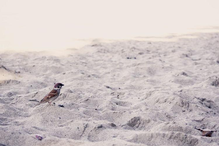 Bird Photography Birds_collection Birdwatching Birdy Day FootPrint Outdoors Sand Summer Showcase: November Bird Watch Bird Art Bird On The Beach Alone Cute Small Bird Cutest Bird