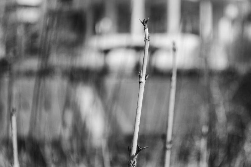 Single Blackandbokeh Concreteandgrass Evolution  Gray Hogweed Manualfocus Museum Pentaxk3 Weed