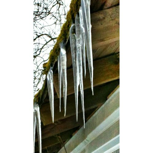 Frozen Snow Day Deepfreeze Frozen In Time