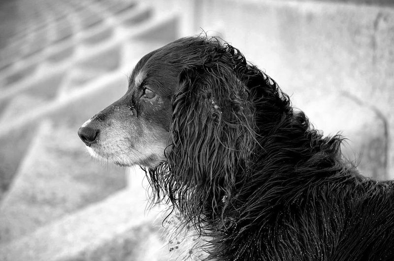 One Animal Animal Mammal Dog Animal Themes Canine Pets Domestic Domestic Animals Looking Away No People Close-up Focus On Foreground Animal Head  Outdoors Side View