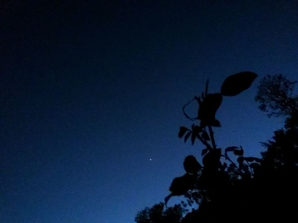 Blue Silhouette Nature Sky Night Love To Take Photos ❤ Costa Rica Summernight