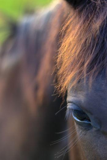 Horse Eyelash