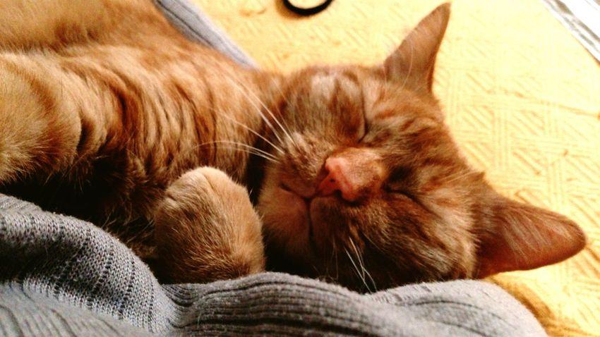 Mein Liebling März2015 Cats Katzen Mein Kater I Love My Cat I Love My Cat ❤ Katze Tiere Animals