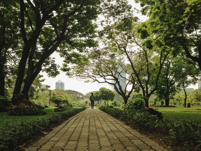 Alone in the park Brick Tile Way Concrete Back Garden Outdoors Day Alone Walking Tree Full Length Branch Men Walking Rear View Sky Grass Green Color Treelined Narrow Walkway Pathway Under Footpath Park Woods The Way Forward Lane