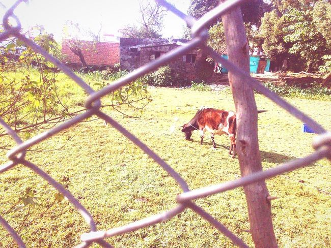 Chainlink Fence Animal Themes One Animal Mammal Day Protection Outdoors No People Tree Shadow Standing Domestic Animals Animals In The Wild Full Length Grass Nature