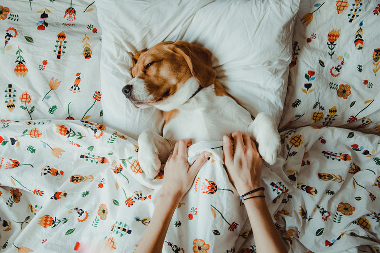 Nuca the beagle, sleepy dog in the bed Indoors  Bed Furniture One Animal Pets Domestic Animals Relaxation Domestic Mammal Resting Vertebrate Canine Floral Pattern Animal Themes Animal Dog Looking Home Interior IKEA Ikea Design Morning Morning Light Beagle Beaglelovers Dogs Of EyeEm