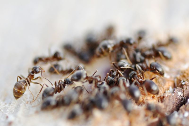 Close-up of ants on field