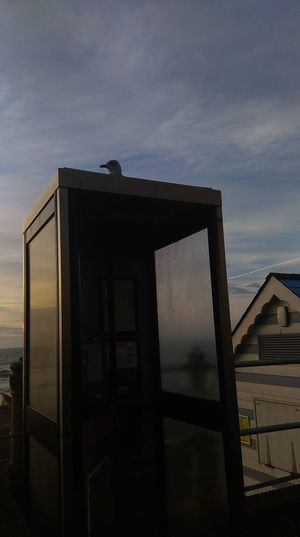 phone booth,phone box,seagull,Bird,square,phone box, Smartphone Photography Amateurphotography St Leonards No Filter, No Edit, Just Photography Coastal Town Outdoors Nature Sillouette Animalphotography Silseaside,fresh Air, No People