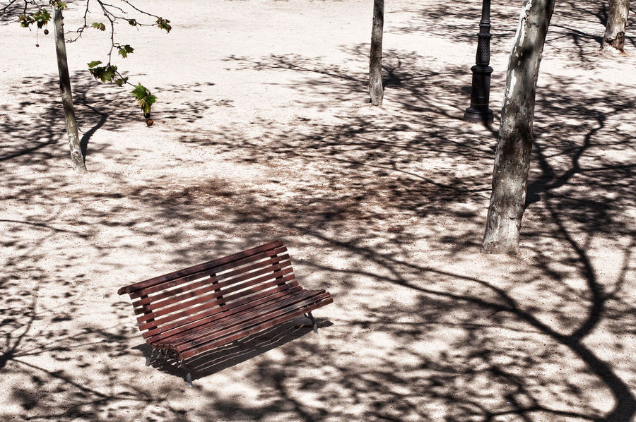 A park in Madrid Absence Beauty In Nature Bench Branch Close-up Day Empty Empty Places High Contrast High Noon Madrid Nature No People Outdoors Park Shadow Shadow And Light Shadowplay Shadows Summer Summertime Sunlight Sunlight Sunlight, Shades And Shadows Tree