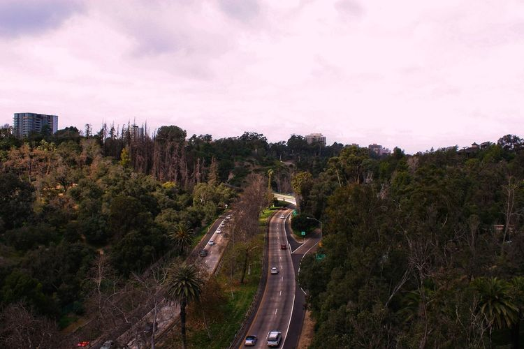 Transportation Road High Angle View Car Sky No People Winding Road Tree The Way Forward Outdoors Curve Nature Beauty In Nature Day