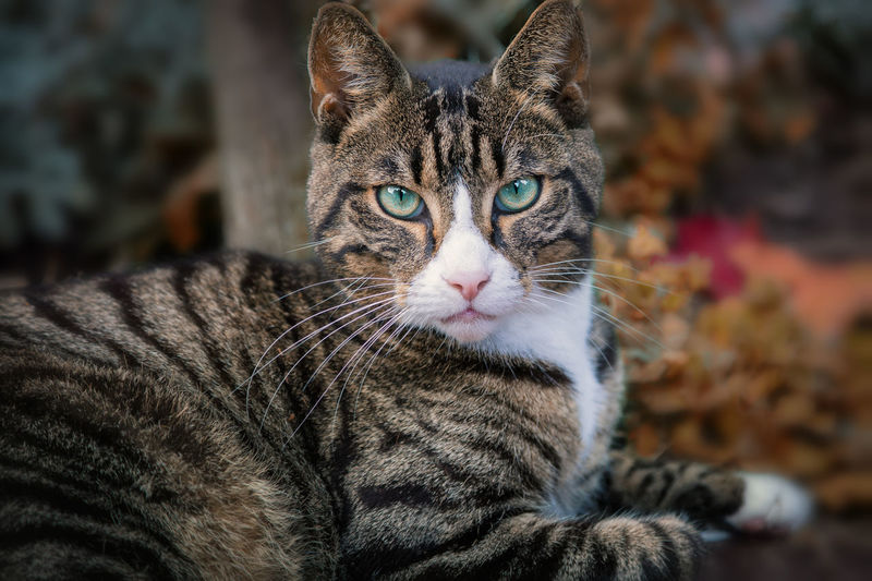 Domestic Cat Pets Feline Animal Themes One Animal Domestic Animals Mammal Portrait Close-up Day No People Indoors  Nature Leopard Autumn🍁🍁🍁 Andernach Cat Cat Lovers Pussycat Animals In The Wild Animal Germany Lanfscape Travel Romantic