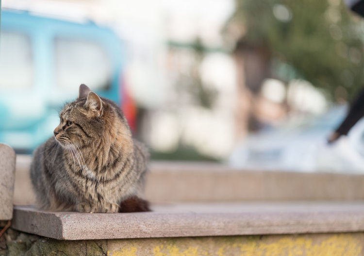 Close-up portrait of cat sitting on retaining wall