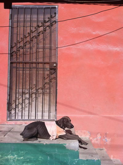 Dog resting in pastel coat against pink wall and green step Grill Door Rest Dog Pastels Architecture Built Structure Casual Clothing Day Dog Dog In Coat Full Length Leisure Activity Lifestyles Lying Down Men Nature One Person Outdoors Real People Relaxation Resting Side View Sleeping Social Issues Sunlight The Traveler - 2018 EyeEm Awards Architecture Contemplation Tired #urbanana: The Urban Playground