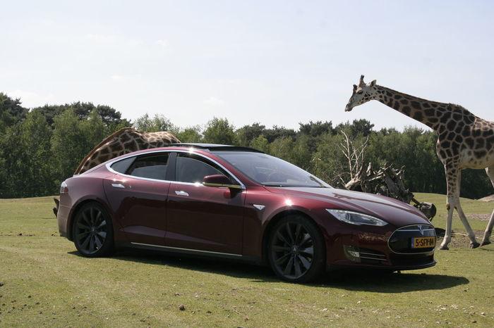 Animals Car Day Electric Outdoor Photography Outdoors Tesla Teslamotors