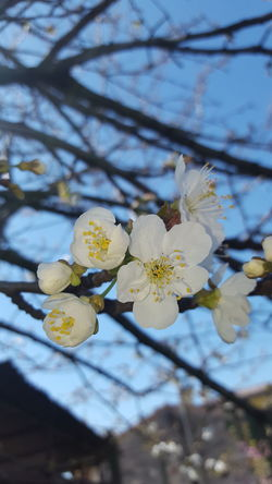 Branch Nature Flower Plant Growth No People Close-up Blossom Beauty In Nature Outdoors Tree Springtime Flower Head Fragility Day Freshness Cherry Blossoms Cherries🍒 Cherrytree