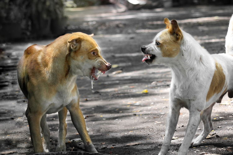 View of two dogs on land
