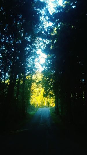 Country Road Treelovers Summers End Naturerox Washington Life Is Beautiful Taking Photos Treethugger Summertime Hanging Out Mountain Life