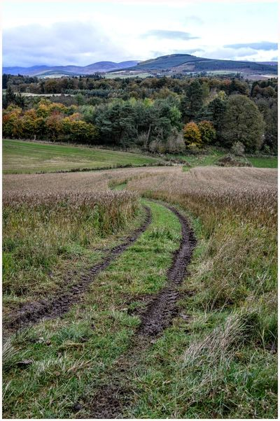 Kirriemuir Countryside Cultivated Land Rural Scene Crop  Field Beauty In Nature Farming Life Scenics Antumn Growth Agriculture Landscape Tree Backgrounds Outdoors Green Color Autumn Colors Cloud - Sky Textured  Treeline Farm Hills And Valleys Pathway Beauty