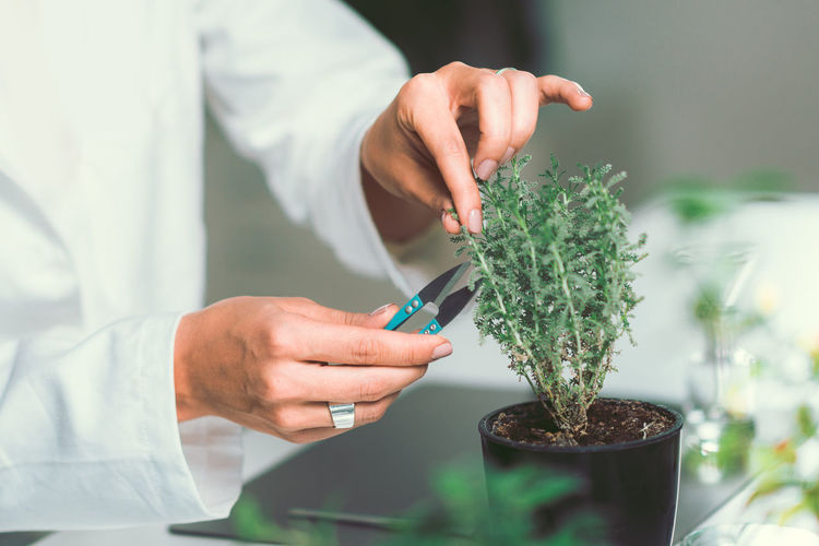 Midsection Of Female Scientist Cutting Potted Plant In Laboratory