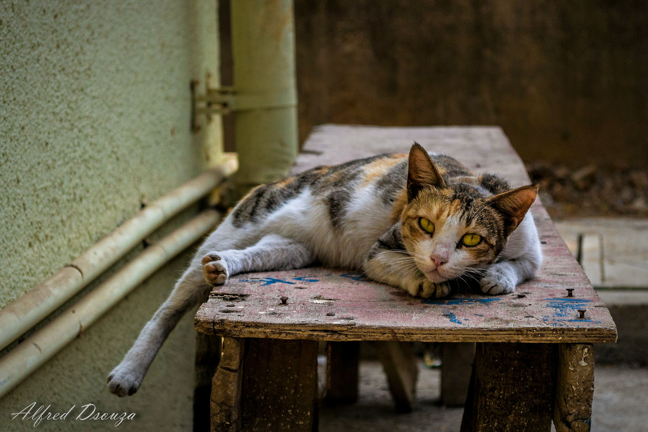 animal themes, one animal, domestic animals, pets, domestic cat, mammal, cat, relaxation, close-up, feline, sleeping, no people, indoors, focus on foreground, day, food, food and drink, selective focus, wood - material
