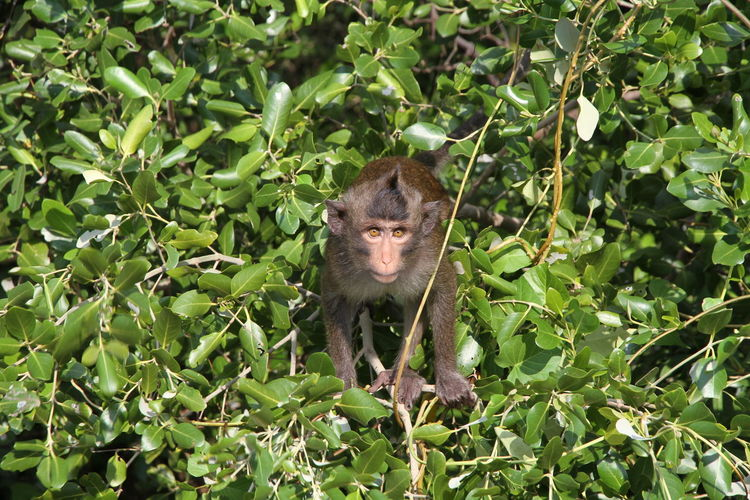 Monkey ambush. Monkeys Ambush Animal Animal Wildlife Animals In The Wild Day Mammal Monkey Monkey Ambush Monkey Attacked Nature No People One Animal Outdoors Primate Vertebrate
