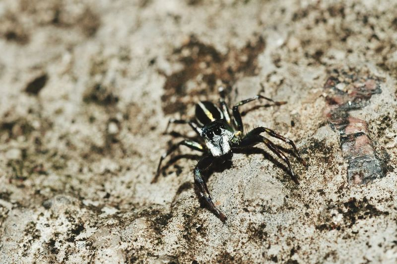 High angle view of spider on rock