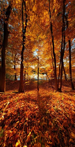 """The best time to plant a tree was 20 years ago. The second best time is now."" Nature Tree No People Autumn Beauty In Nature Outdoors Day Leaf Branch Close-up Sky Explore Colorful Colors Colors Of Autumn Color Explosion Colors Of Nature Bright Bright Colors Sunset Nature Illuminated Sun Sunlight Sunbeam"