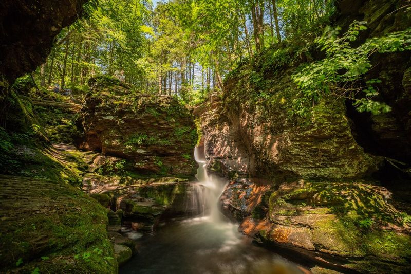 Waterfall Tree Plant Water Beauty In Nature Scenics - Nature Nature Green Color Forest Long Exposure Waterfall No People Environment Outdoors Flowing Sunlight Flowing Water