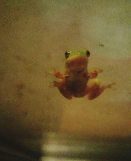 Mrrainfroggie