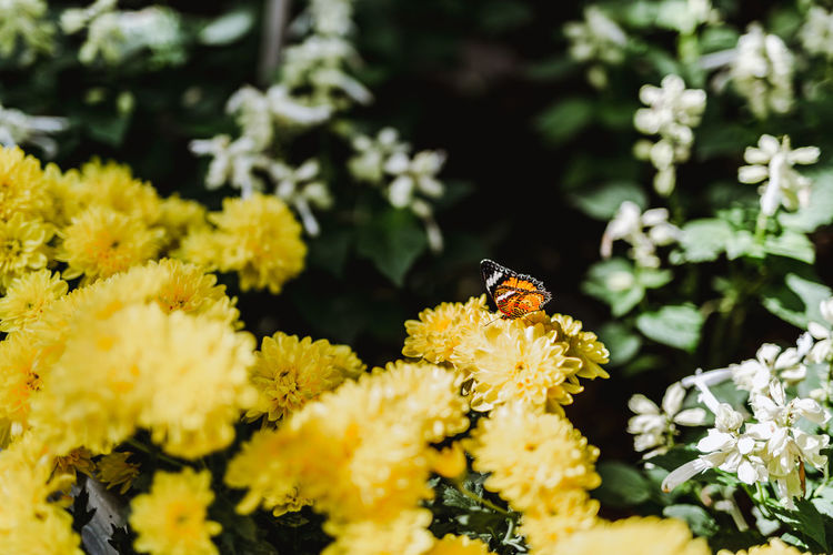 Butterfly. Flower Flowering Plant Animals In The Wild Invertebrate One Animal Yellow Fragility Insect Animal Themes Beauty In Nature Plant Animal Wildlife Animal Vulnerability  Growth Petal Freshness Flower Head Bee Close-up No People Pollination Outdoors Pollen Butterfly - Insect