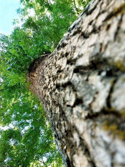 🌳 Blur Tree