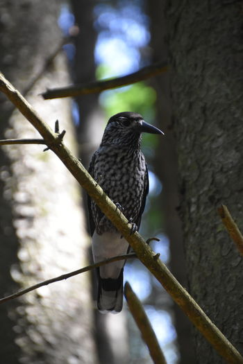 Close-up of bird perching on branch