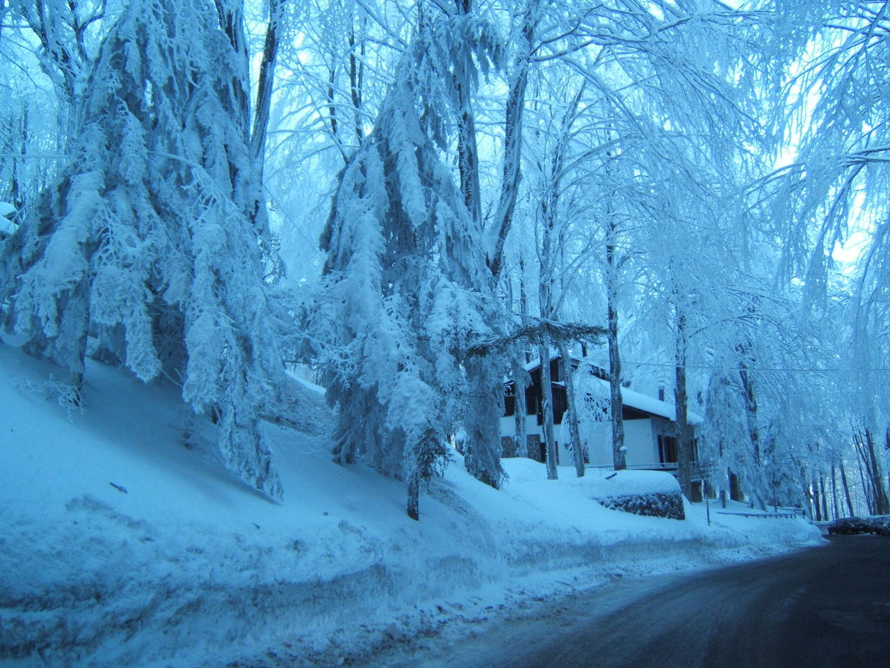 winter, snow, cold temperature, tree, nature, white color, transportation, road, bare tree, no people, tranquil scene, beauty in nature, tranquility, frozen, landscape, outdoors, scenics, day