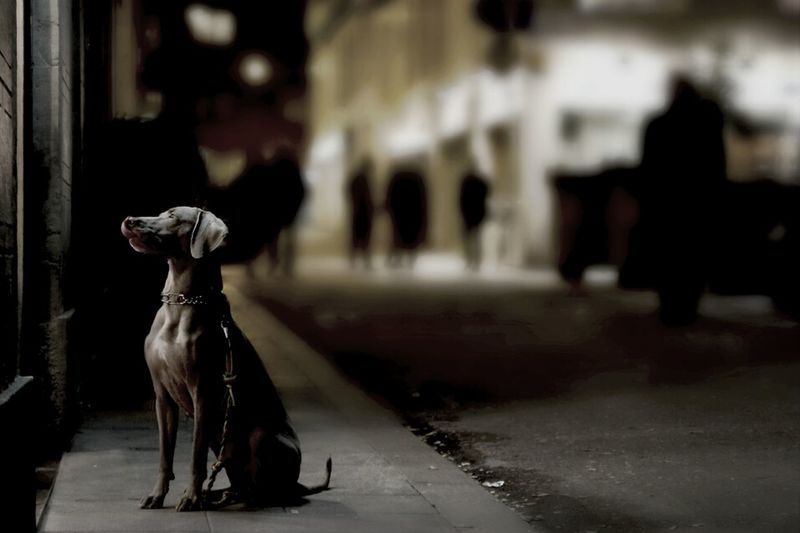 Street Night Streetphotography Dog Taking Photos Pet Barcelona Photostreet Bcn