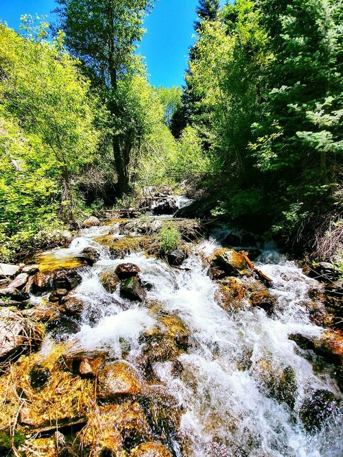 Nature Day Outdoors No People Water Growth Tree Sunlight Beauty In Nature Scenics Sky WasatchFront Wasatch Mountains Hiking Trail Hikingadventures Green Color Landscape Tranquility Mountain Range Rocky