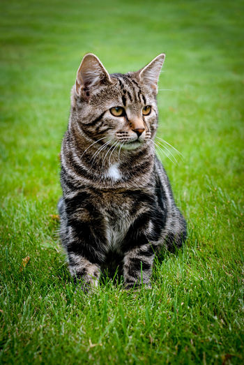 Relax Wild Pet Zen Cat Gross Photography Wildlife Life Citty Cat Cat Lovers No People Grass Green Kitty Cat Kitty Adult Young Animal Hunting