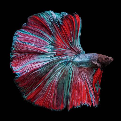Close-up of multi colored fish
