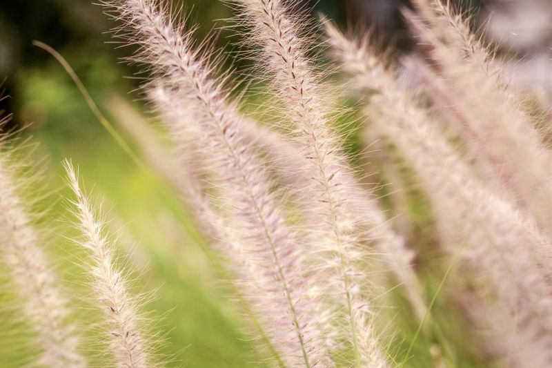 Grass Plant Nature Growth Beauty In Nature No People Grass Land Environment Close-up Tranquility Green Color Day