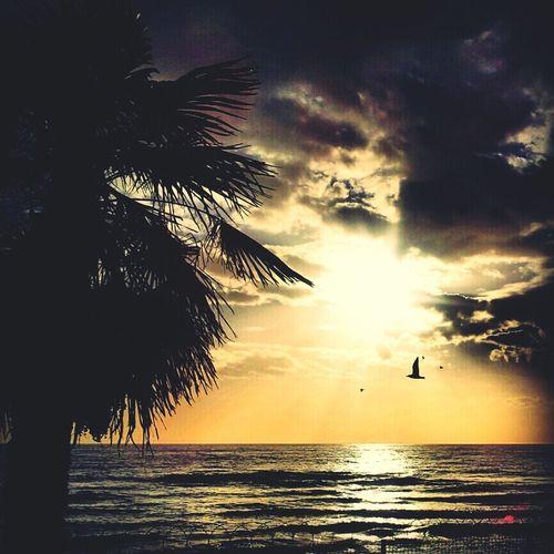 Hanging Out Beautiful Sunrise Enjoying The Sun Taking Photos Photo TheMinimals (less Edit Juxt Photography) Hello World